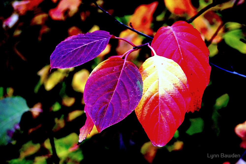 """Colorful Leaves"" by Lynn Bawden"
