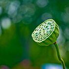 Green showerhead by Sylvain Dumas