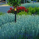 Prize Garden by sharka69