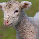 Yileena Park Lamb by Di Jenkins