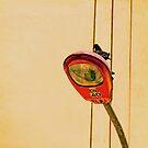 Pigeon in lamppost by Constanza Barnier