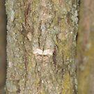 Motte auf der Rinde von TheVioletWitch
