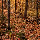 An Autumn Day by K D Graves Photography