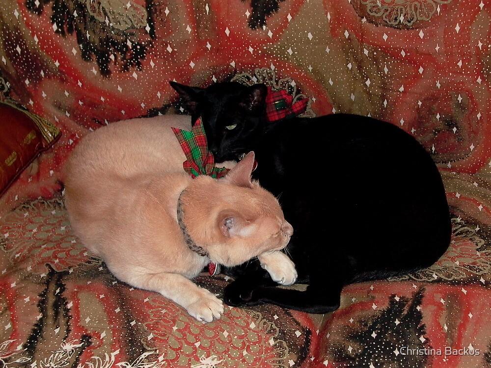 Christmas Cats by Christina Backus