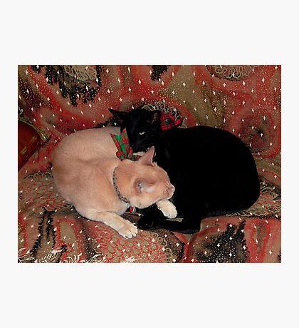 Christmas Cats Photographic Print