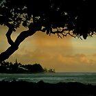 Tree Cover... Kauai Sensual Series by linaji