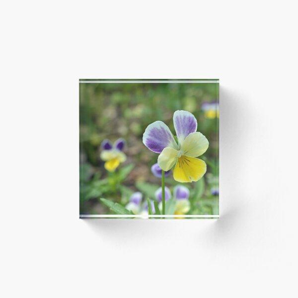 Purple Yellow Pansy Acrylic Block