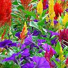 Color Medley - Colonial Park Gardens, NJ by Timothy Accardo