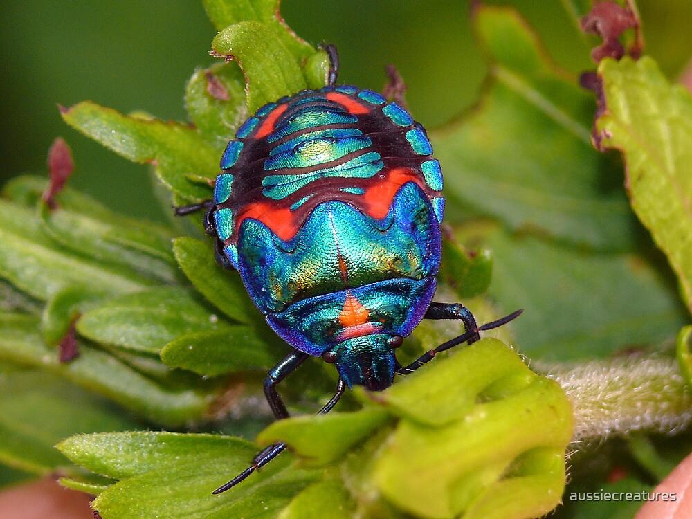 Quot Cotton Harlequin Bug Male Quot By Aussiecreatures Redbubble
