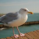GULL ON THE EDGE by RED-RABBIT