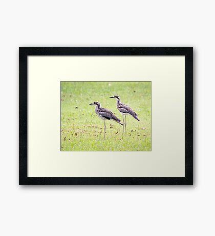 Stand Tall - curlews Framed Print