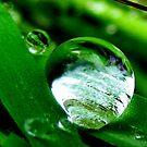 Green drop by michele1x2