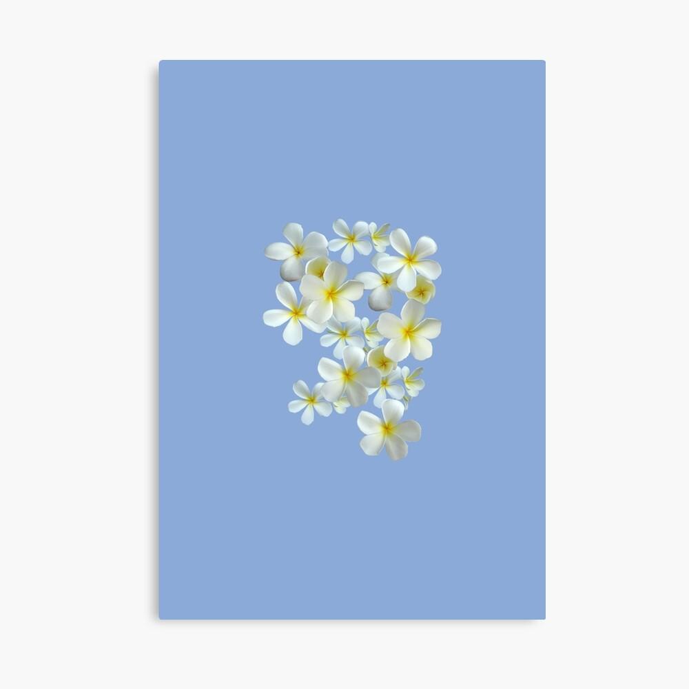 Frangipani - Weiß und Gelb Leinwanddruck