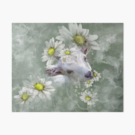 Don't Eat the Daisies Baby Goat Art Board Print