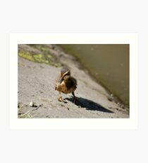 Baby Duck - By The Pond Art Print