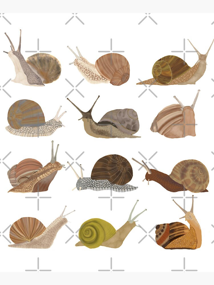 Snails by amymh