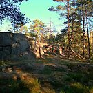 Rocky grounds in the forest by Tarolino