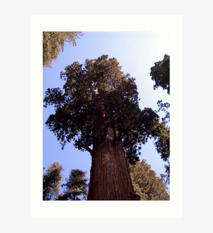 General Sherman sequoia Art Print