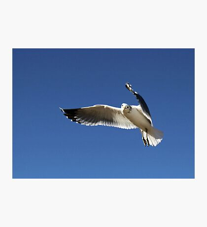 I Am Not Just Another Gull Photographic Print