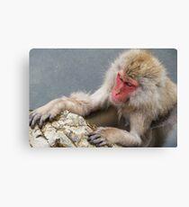 Monkey Onsen Canvas Print