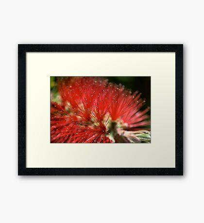 Red Australian Framed Print