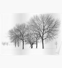 Stormy Winter Trees - Lake Michigan Poster