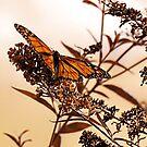 Beautiful Wings by Pat Moore
