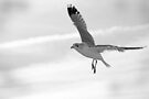 Seagull in Black and White by Corri Gryting Gutzman