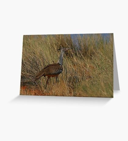 Kori Bustard Greeting Card