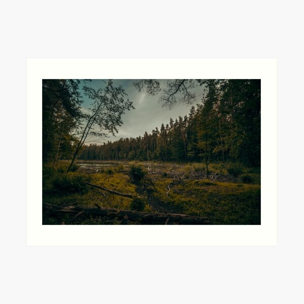 Old Forest Lake Art Print