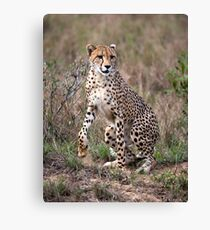 Spring to action ! Canvas Print