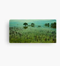 Ocean Mangroves - Moreton Island - Queensland Canvas Print