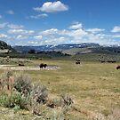 Where the Buffalo Roam,  by AnnDixon
