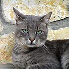 Gandalf the green eyed by didi24