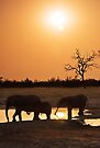 Sundowners, Savute Botswana by Neville Jones