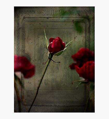 Roses are Red #3 Photographic Print