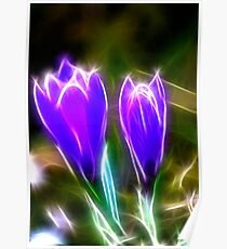 Sparkling Crocus Poster