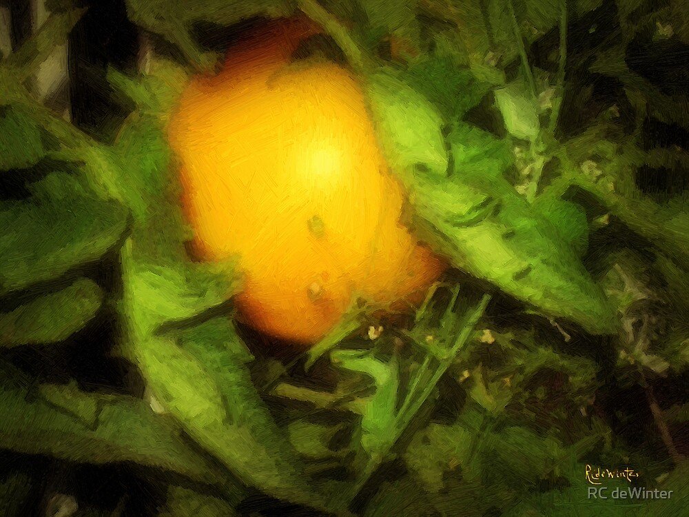 The Sun Is Sleeping in the Garden by RC deWinter