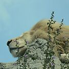 King at rest by Vanessa Combes