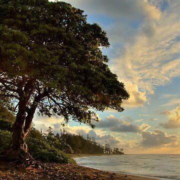 Mighty Beach Tree by rudavis