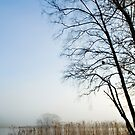 Esthwaite Reed Bed by Michelle Lovegrove