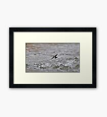 Dipper Over Rough Water Framed Print