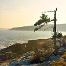 Otter, Point, Acadia National Park, Bar Harbor, Maine by fauselr