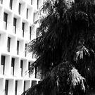 Trees and pattern, Pasadena, CA October 2010 by joshsteich