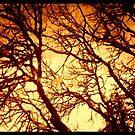 fire tree by Lady  Dezine
