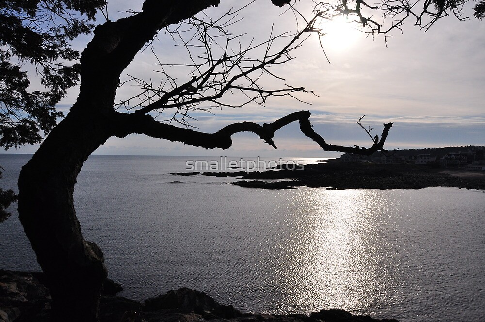 Funny Tree and Ocean View by smalletphotos