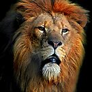 African Lion by Brian Tarr