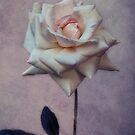 Rosalie by lucyliu