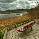 Benches at Burnaby Lake by Michael Garson