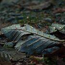 Leafy Trail by Michael Garson